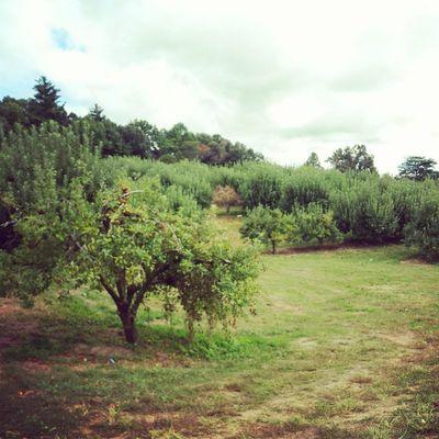 Apple orchard! Bjreeceapplehouse Schoolfieldtrip