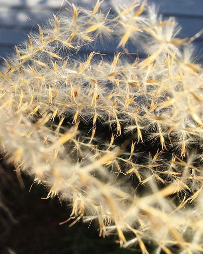 Close-up Thorn
