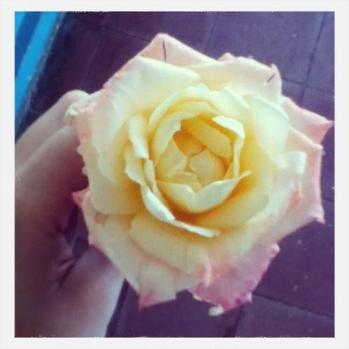 Flower Beautiful Photography