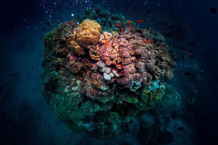 View of fish underwater