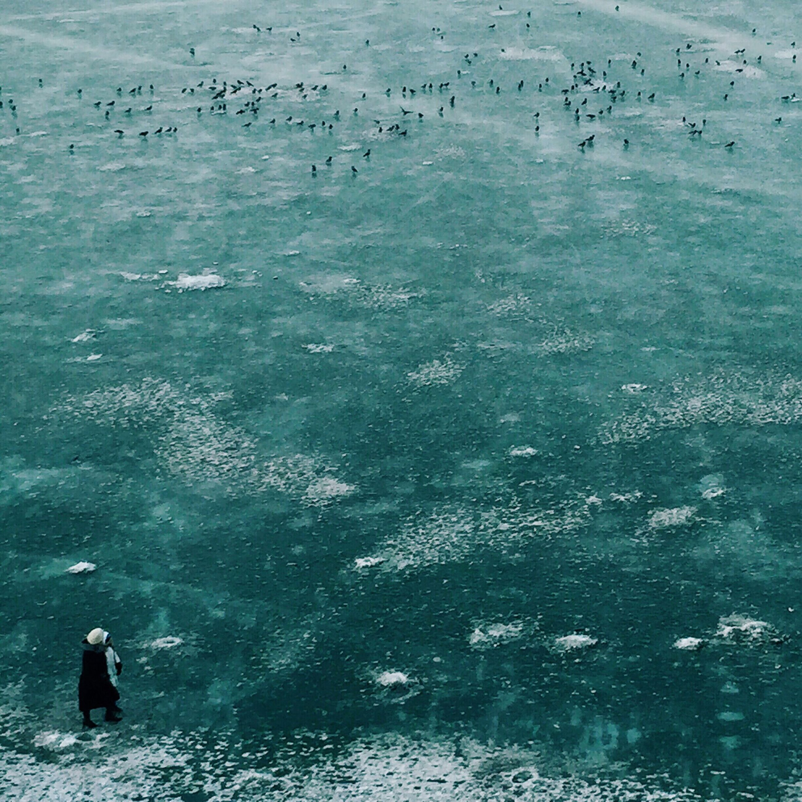 water, bird, sea, animal themes, animals in the wild, wildlife, beach, high angle view, flock of birds, nature, swimming, tranquility, beauty in nature, shore, day, tranquil scene, outdoors, scenics, vacations