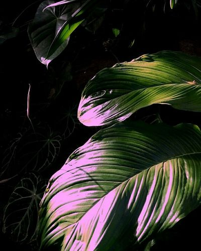 Plants 🌱 EyeEm Nature Lover Neon Color Plants And Flowers Green House Chlorophyll Neon And Plants Neon