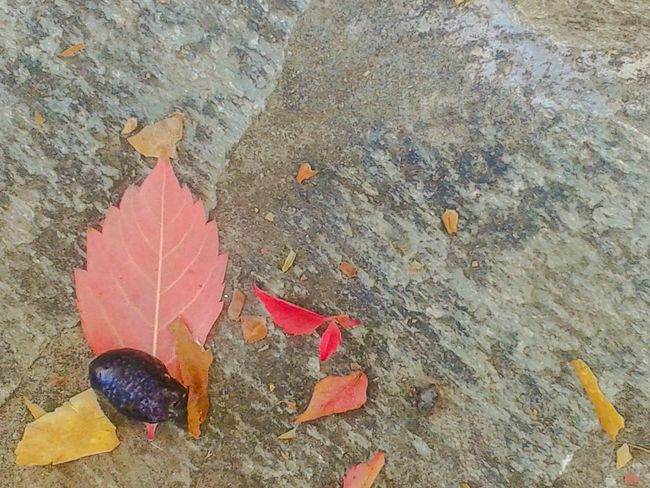 Autumn Leaves Autumn Autumn Colors Autumn🍁🍁🍁 Autumn Collection Leaves Olive Red Red Leaves Leaf Nature Beauty In Nature Pavement Pavement Slabs Slabs Minimal Minimalism Backgrounds
