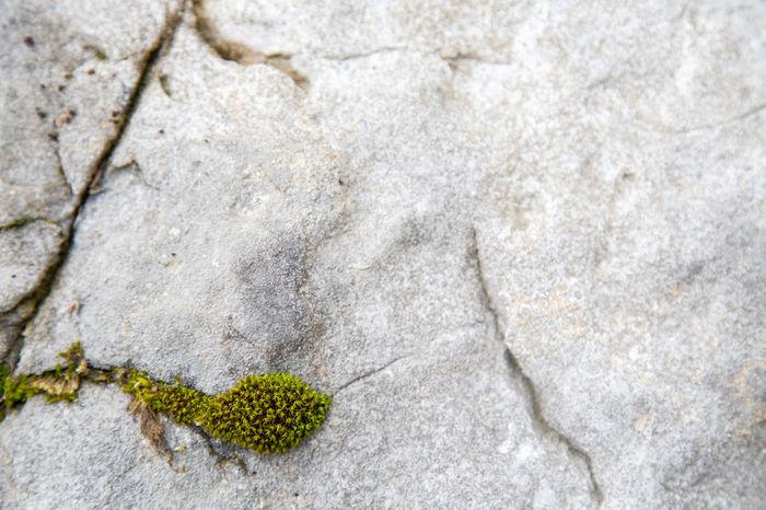 Roccia Muschio Verde Muschio Roccia Texture Nature Foresta Forest Welness Rock Formation Rock Stone Moss Moss & Lichen Mossy Stone Textures And Surfaces Texture