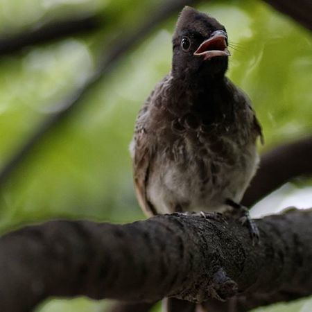 Mummy where are you? Natureinside Naturewhisperers @natgeo @natgeotravel @regrann Birdphotography _soi bird_captures