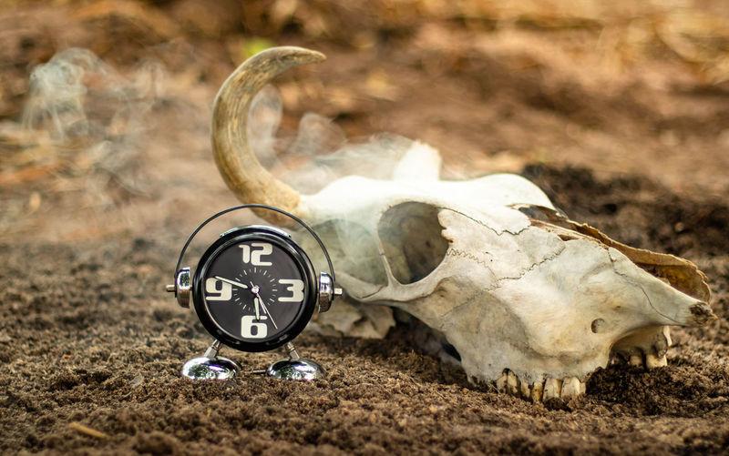 Close-up of animal skull on the ground