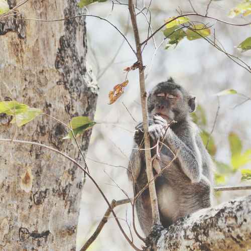 Guess what, when monkey need to pray. Getting Inspired Animals Nature Silence