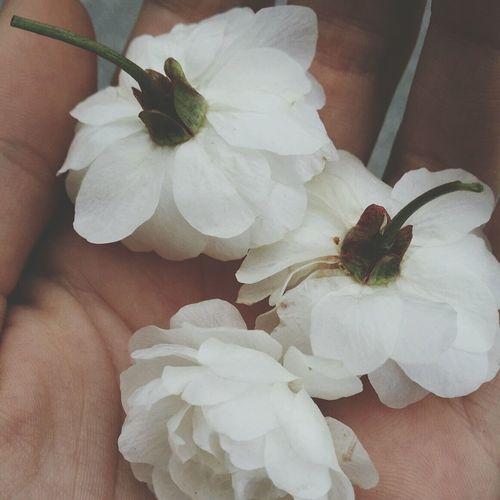 From Yesterday  White Flower Hand