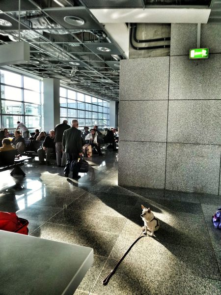 Airport Stories Airportlife Lonely Doggie Dog Life Waiting For ... Airport Frankfurt Frankfurt Am Main Citylife Modern Times Urban Lifestyle Germany🇩🇪 as I am on holidays,with bad Internet, I can't check your fotos, like I normally do, my friends. but I am not sorry 😉😎🏄‍♂️🤽‍♀️🗻 Be. Ready. Adventures In The City The Photojournalist - 2018 EyeEm Awards
