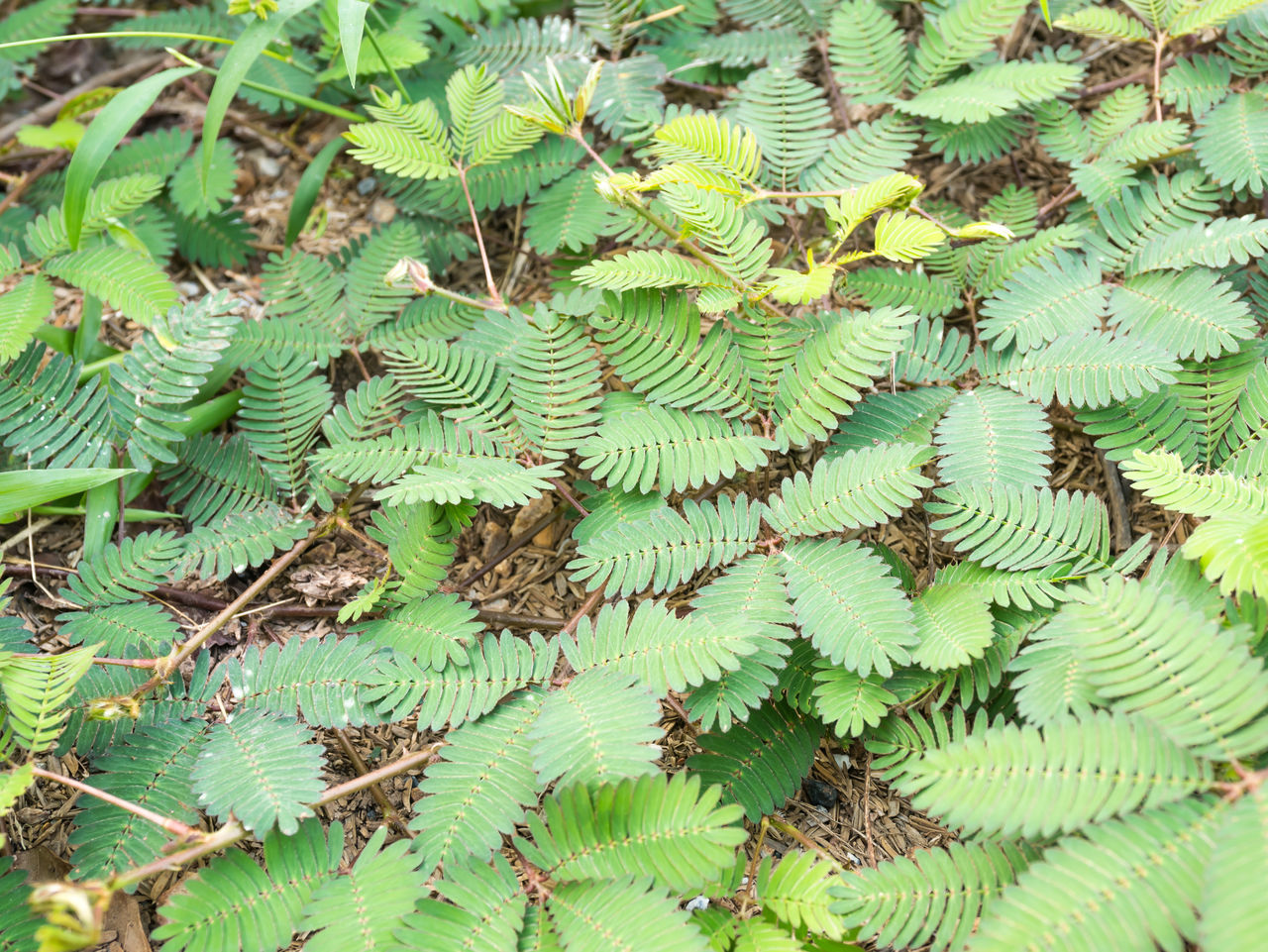 growth, green color, plant, leaf, nature, day, high angle view, outdoors, no people, fern, close-up, beauty in nature, freshness, fragility