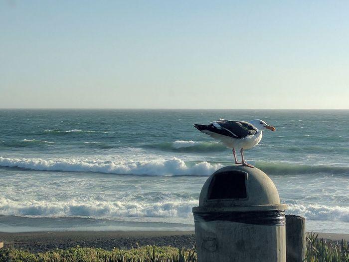 Bird perching on beach against clear sky