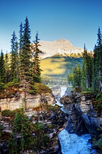 Athabasca Falls Waterfall Plant Tree Nature Clear Sky Beauty In Nature Sky Scenics - Nature Tranquility Tranquil Scene Day No People Non-urban Scene Landscape Mountain Outdoors Environment