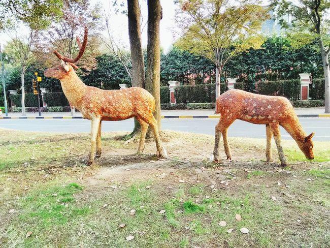 (ฅ>ω<*ฅ) Deers
