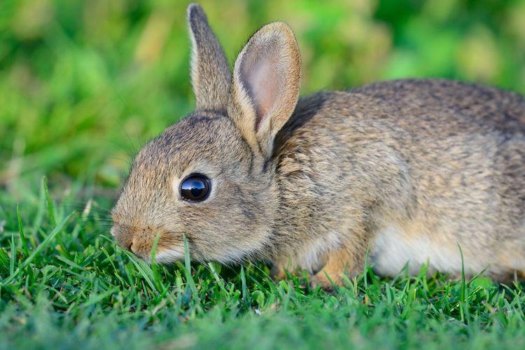 Close-up portrait of rabbit on field