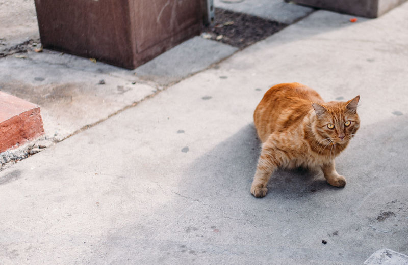 Cat City Day Domestic Domestic Animals Domestic Cat Feline Footpath Full Length Ginger Cat Mammal No People One Animal Pets Sidewalk Sitting Vertebrate Whisker