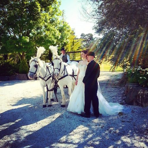 Congrats Clint and Kelly! Wedding Horses Beautifulcouple