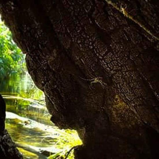 Em algum lugar no Parque da Serra do Cipó! Cipő Serradocipo Varamato Trekkingbrasil Trekking ParqueNacional Aranha Natureza