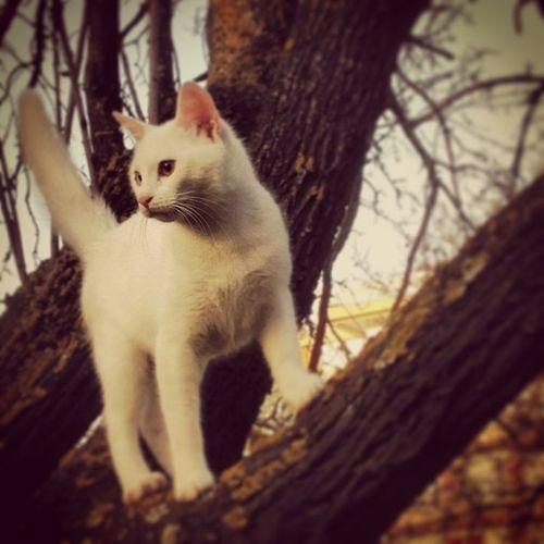 Cat Kitty Greece Pet lovemypetinstapetinstacatnefeliwhitewalkmorninglovein_loveinstagohteiakittentreenaturerelaxedjoggingcrazyhappyhermeforestinstamoodmydailycapturemydailyphotopetphotomemoriesgrowing