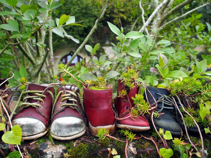Plant Shoe Growth Nature Pair Leaf Day No People Plant Part Outdoors Boot Green Color Absence Land Tree Focus On Foreground Close-up Rubber Boot Potted Plant Abandoned Personal Accessory Compatibility Plant And Shoe Art Deco Art Decorations