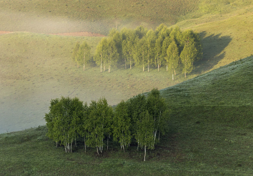 foggy morning in Apuseni Mountains Light Beauty In Nature Day Field first eyeem photo Grass Green Color Growth Landscape Nature No People Outdoors Scenics Shadows Tranquility Tree
