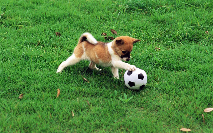 Dogs being dogs. Grass Ball Mammal Plant Green Color Animal Pets Animal Themes Domestic Soccer Ball Soccer One Animal Land Canine Domestic Animals Field Dog Playing Motion Nature No People Nature Dogs Dogs Of EyeEm Grass