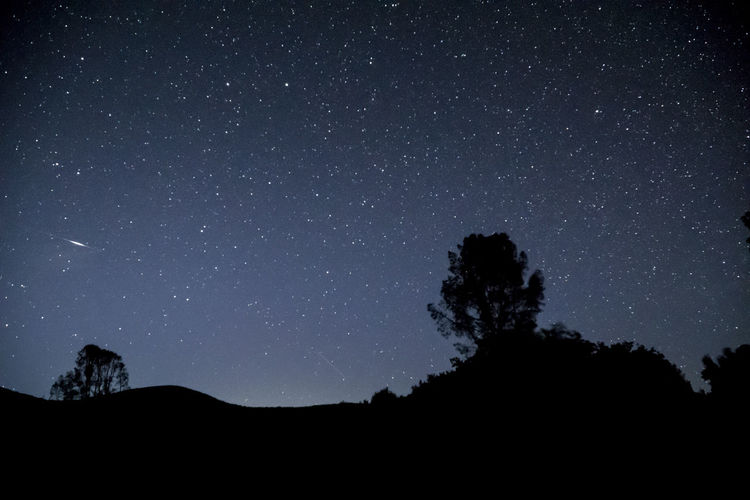 Silhouette trees against star field
