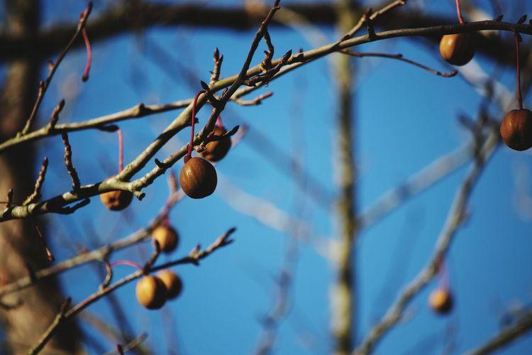 Last Fruit Tree