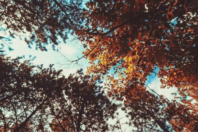 Tree Low Angle View Nature Growth No People Autumn Branch Day Leaf Beauty In Nature Outdoors Sky Backgrounds Close-up