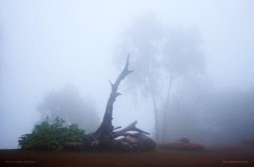 Misty Misty Morning