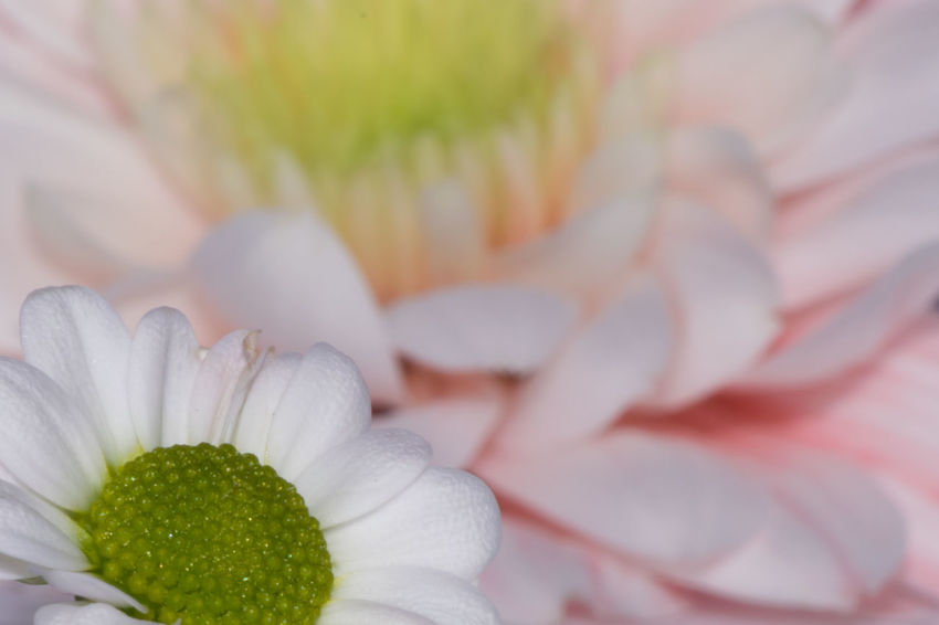Flower Close-up Macro Petal Close Crop Bokeh Nature Colour Image Horizontal Colourful Flowers Green White Pink Natural World Nature Photography Stamens Stalia