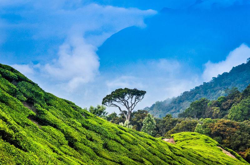 Munnar Kerala Teagardens India Idukki Landscapes