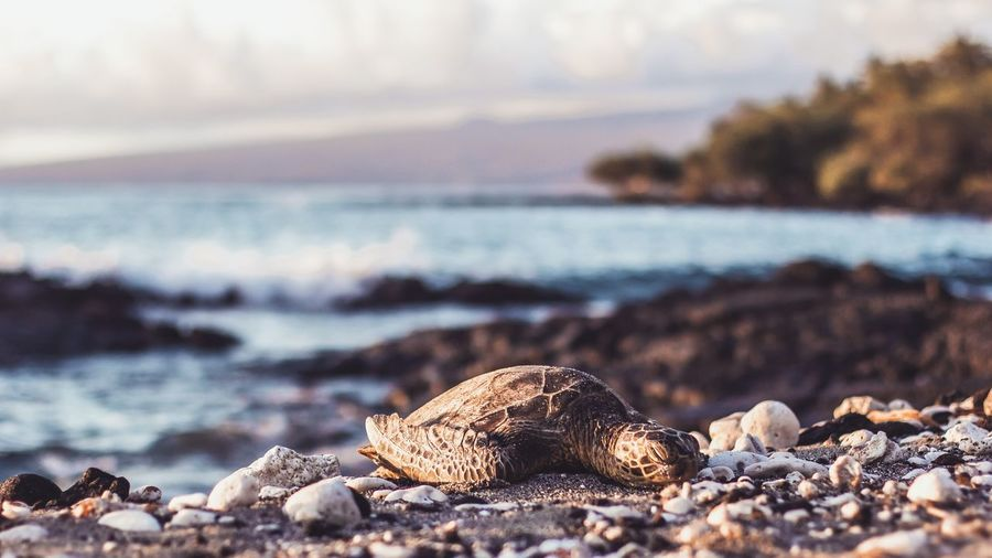 Turtle resting on beach