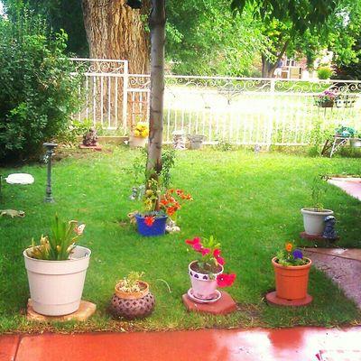 My yard,summer days,after rain, fresh flowers,