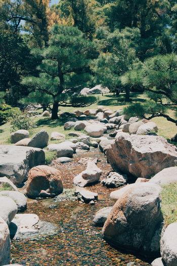 Jardin Japones Buenos Aires, Argentina  Garden Japanese  Color Water Stones Nature