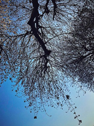 No People Nature Sky Day Tree Beauty In Nature
