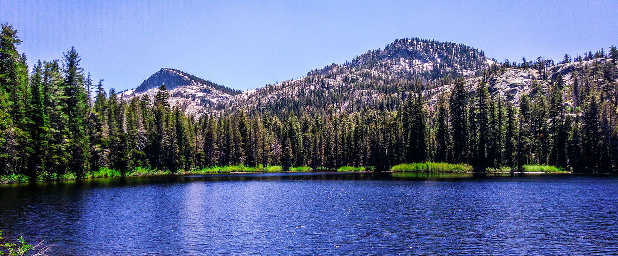 Panoramic view of pine trees in lake against sky