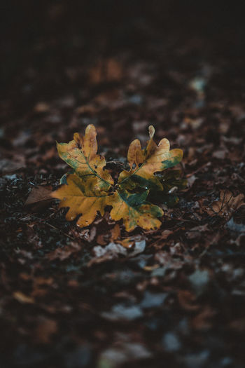 Wet autumn leaves Leaf Plant Part Selective Focus Field Land Nature Close-up Plant No People Growth Beauty In Nature Day Autumn Outdoors Change Vulnerability  High Angle View Dry Fragility Tranquility Leaves Maple Leaf