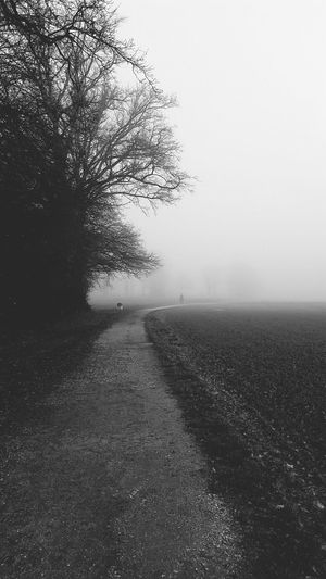 Sleepy Hollow Mystical Atmosphere Running Time Capture The Moment EyeEm Nature Lover Naturelovers Nature Photography HorseNAround Winter_collection Sleepyhollow Monochrome Foggy Day Beautiful Nature Nakedtrees Ontheway Theway