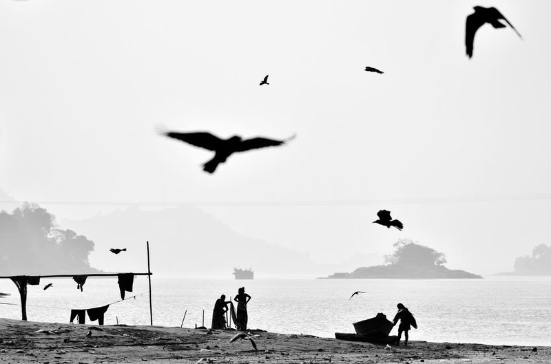 Dailylife in the banks of Brahmaputra Daily Life India Brahmaputra Laundry Women Dry Clothes Black And White Documentary Photography Assam River Bird Spread Wings Bird Of Prey Water Flying Flamingo Vulture Sea Beach Seagull Falcon - Bird Colony Dove - Bird