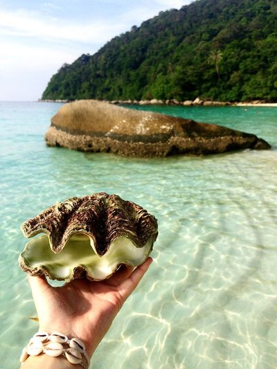 Eye4photography  Photography Paradise Hiddengems Bounty Island Perhentian Island Perhentian Kecil Travel Photography Traveling Daydreaming Wanderlust Best Shot Shell Crystal Clear Water