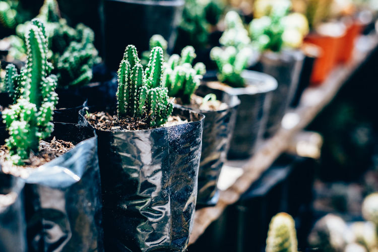Backyard Cactus Copy Space Gardening Home Plant Succulents Air Purifier Arranged Backgrounds Beauty In Nature Bokeh Close-up Freshness Green Color Growth Line Up Nature Organic Outdoors Potted Plant Retail  Row Selective Focus Thorn
