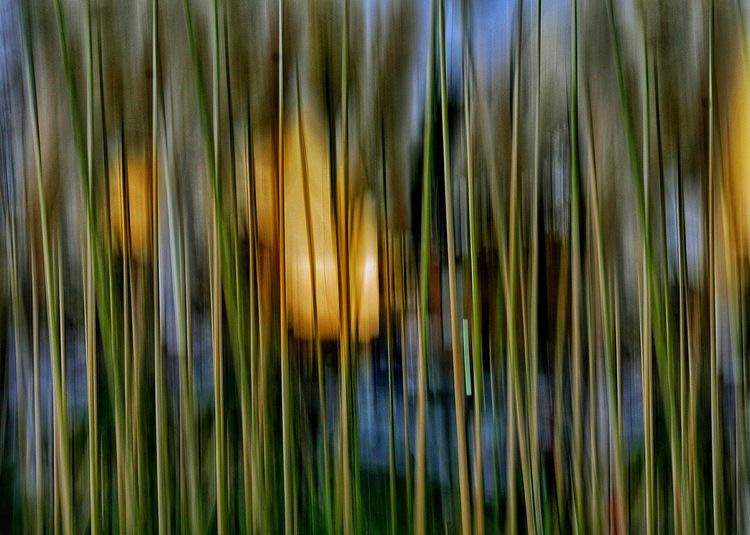 Ways Of Seeing Beauty In Nature Outdoors Full Frame Blured Moments ICM Intentional Camera Movement Icm Growth Beauty In Nature Backgrounds Details Textures And Shapes Multi Colored Growth Backgrounds Abstract Abstract Photography See The Light EyeEm Ready   Shades Of Winter