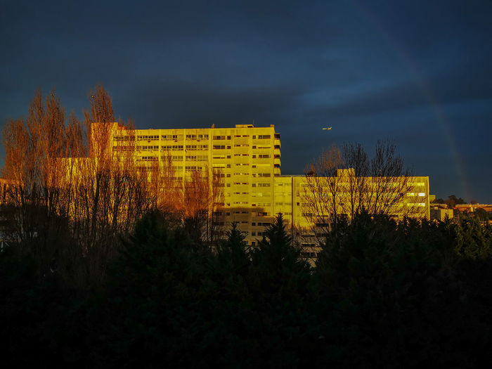 Yellow flowers on field against buildings at night