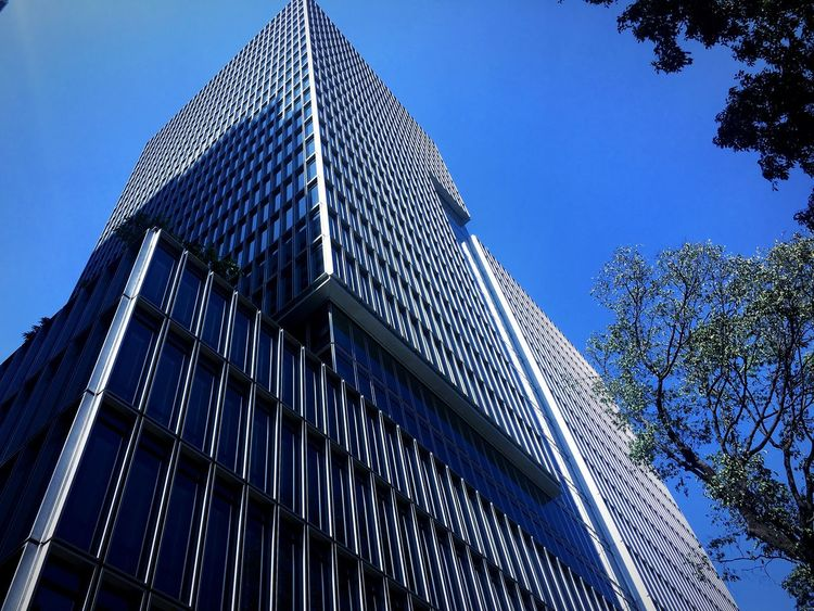 Low Angle View Built Structure Sky Architecture Building Exterior Nature Modern Office Building Exterior No People Building Day Tree Tall - High Office Clear Sky Skyscraper City Blue Tower Plant First Eyeem Photo