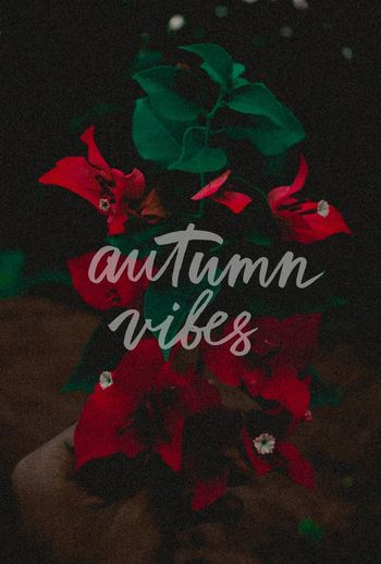 Autumn🍁🍁🍁 Autumn Colours Red Autumnvibes October2017🍂🍁💛 Flower Photography