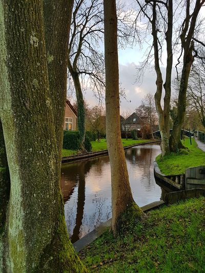 Canals And Waterways Mirror Effect Waterways Countryside The Netherlands Trees Water Reflection Nature Tree Growth Outdoors