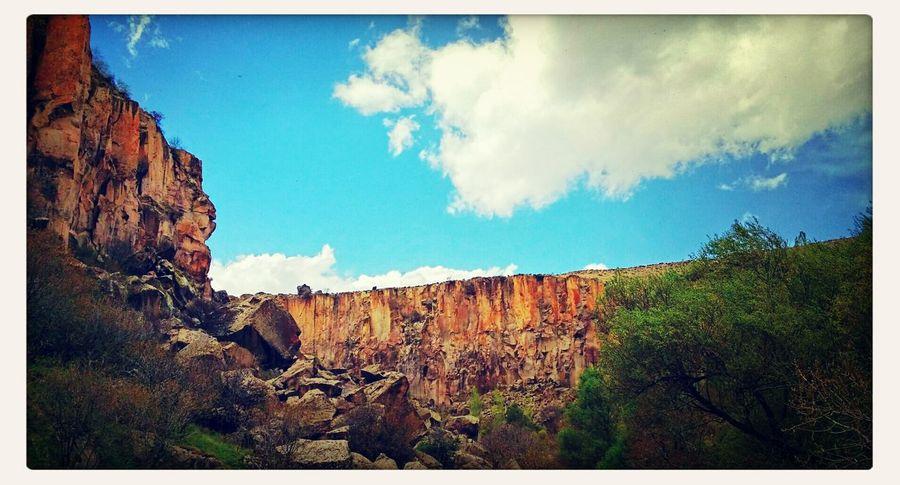 Canyon Turkey