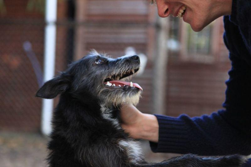 Cropped image of man cuddling dog