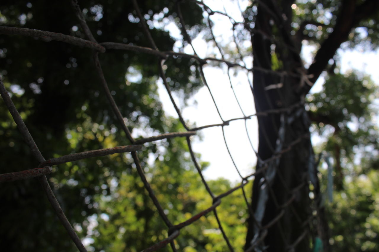 Low Angle View Of Chainlink Fence Against Trees