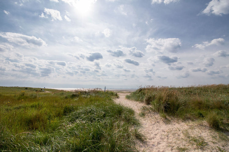 Beach Beauty In Nature Day Landscape Langeoog Marram Grass Nature No People Outdoors Sand Sand Dune Tranquil Scene Tranquility Travel Destinations